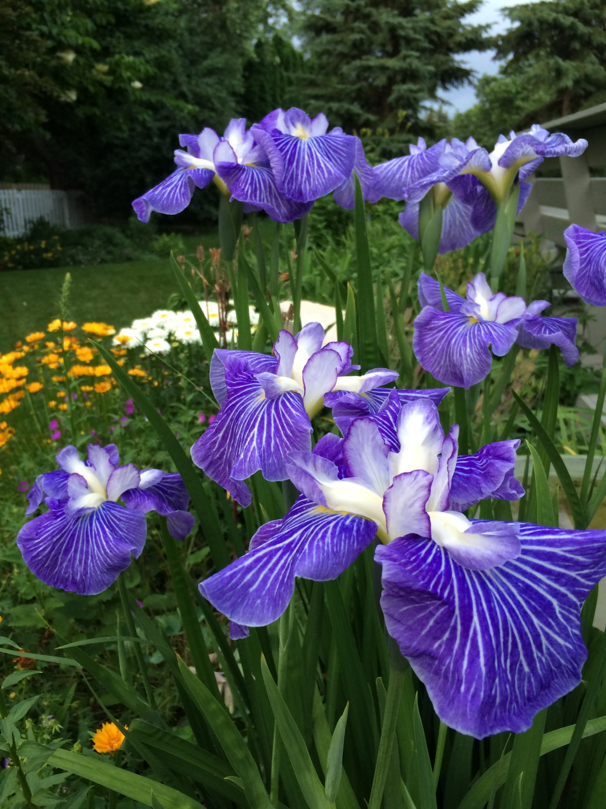 Wordless Wednesday: Passion for Purple
