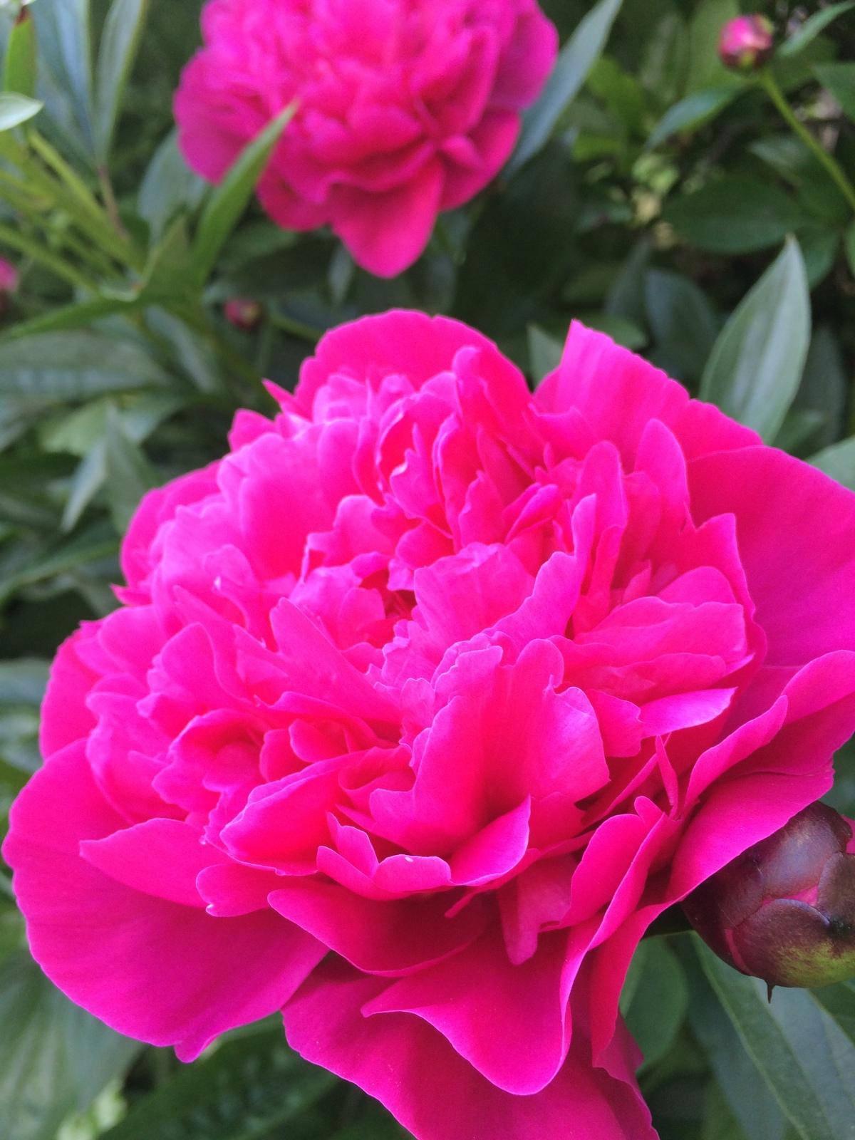 A Garden Memory toSavor