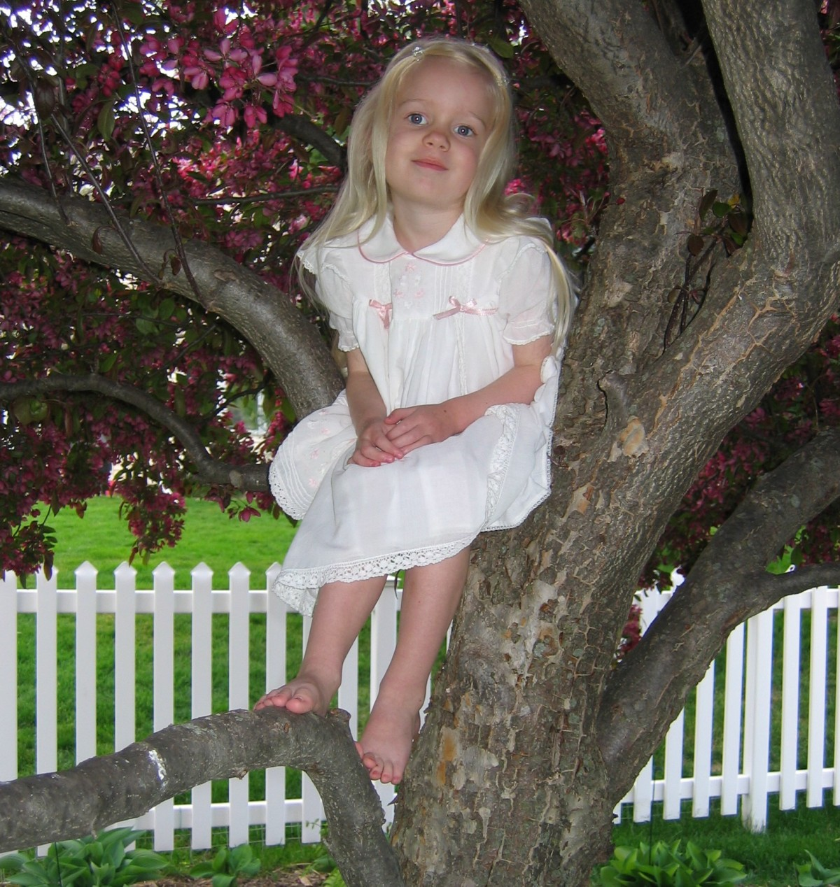 Wednesday's Wisdom – When Climbing Trees isWise