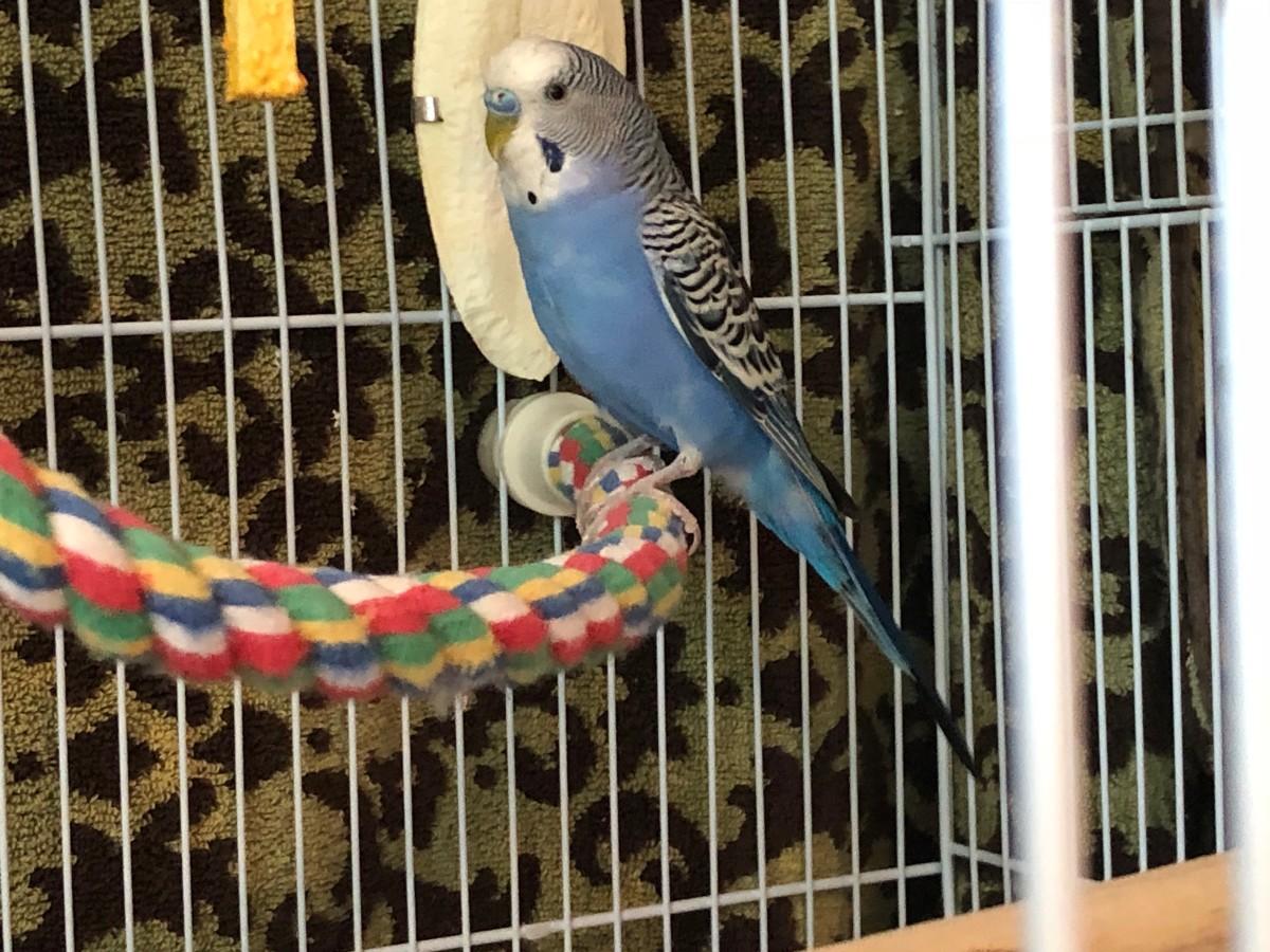 Pretty bird, prettybird